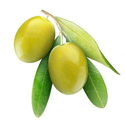 hairoil-olive.jpg